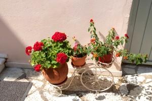 facilities nefeli hotel flowers